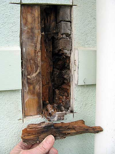 rotted timber